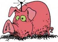 Remote Control Pig
