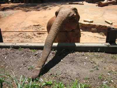 Cell Phone Eaten By Elephant At Zoo