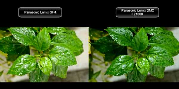 Panasonic Lumix GH4 vs Panasonic Lumix FZ1000 4K video test