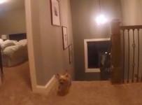 Toddler GoPro