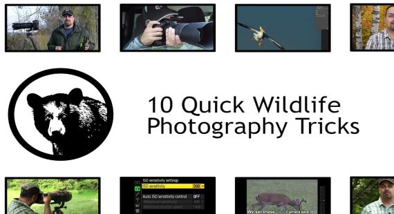 Top 10 Wildlife Photography Tips