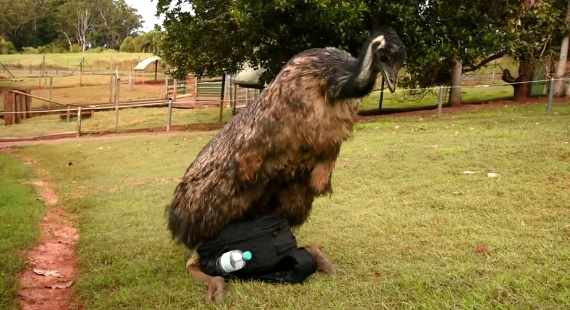 Emu Camera bag